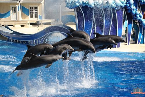 Blue Horizons - Sea World